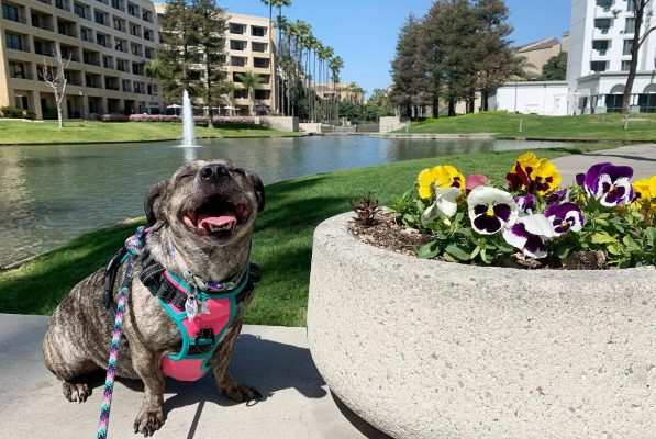 Your Guide to Pet-Friendly Costa Mesa